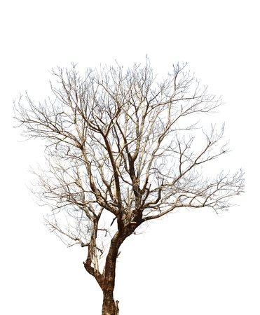 tree on a white background in high definition  photo