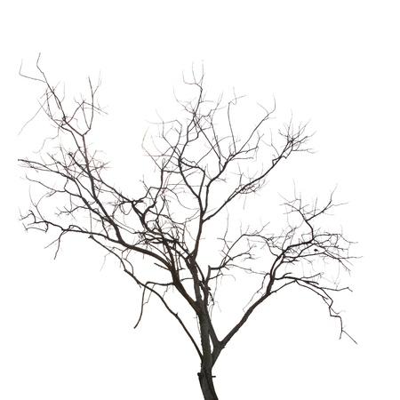 葉のない死んだ木