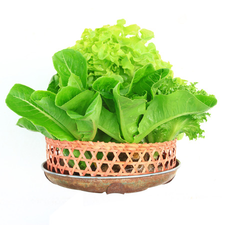 hydroponic: Hydroponic vegetable