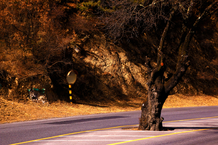 Tree with big trunk on the road