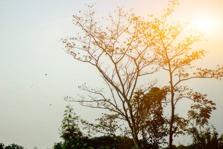 Sunrise through the treetops
