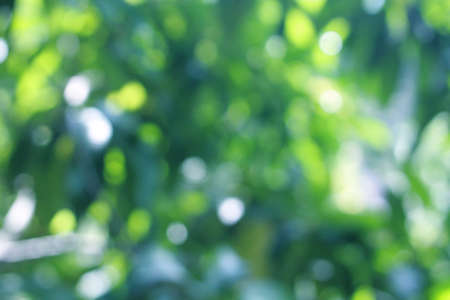 Blue green bokeh background And white from abstract leaves, nature, beautiful and bright