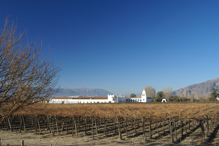vinyard and old factory from cafayate valley