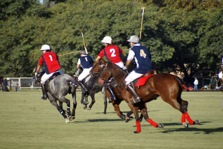 polo: vier polo spelers in actie tijdens een wed strijd