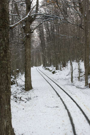 forest railway: The railway that goes through the forest Stock Photo