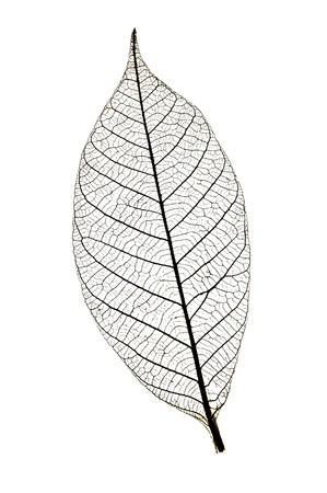 leaf silhouette branch texture