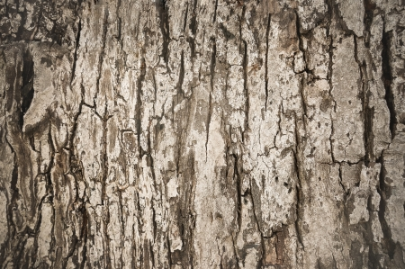 old bark texture photo