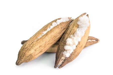 ceiba cotton