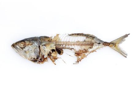 mackerel fish bone isolated white background