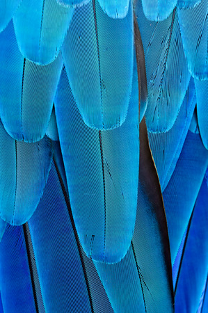 blue feather background Banco de Imagens