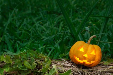 jack o lantern: halloween pumpkin  in dark forest