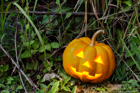 jack o lantern: halloween pumpkin in dark forest Stock Photo