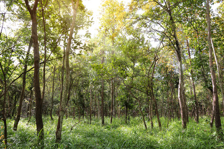 south east asia: Mixed Deciduous Forest in south east asia
