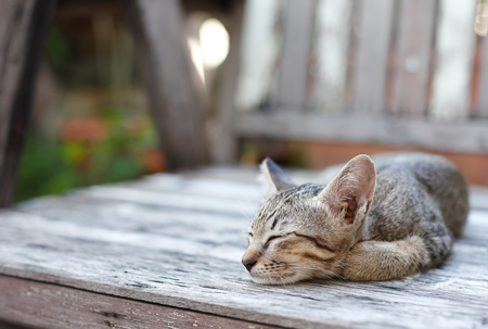 lay down: cat lay down on wood