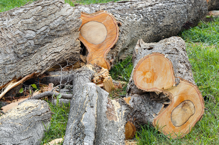 deforested: Deforested  in a forest with cutted trees Stock Photo