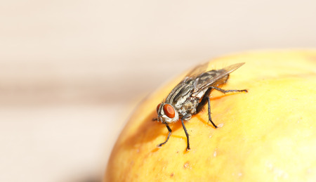 a fly on a rotting fruit