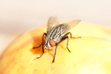 a fly on a rotting fruit
