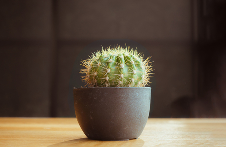 Little cactus stand alone on wooden table with dark background