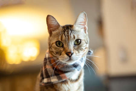 Lonely handsome tabby cat  portrait Stockfoto