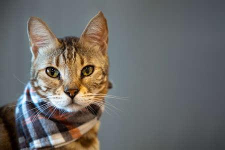 Handsome tabby cat on dark background