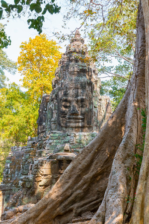 prasat bayon: Big tree in front of Bayon temple Stock Photo