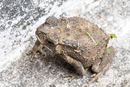 toad Stock Photo - 77731341