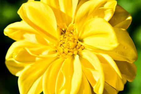 cymbidium flower Stock Photo