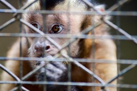 Animals in the khaokheow open zoo Chon Buri Thailand