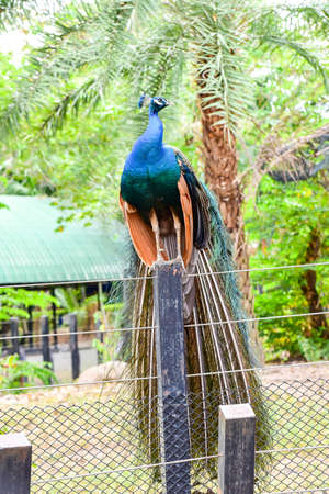 Chai nat Thailand December 26 2019 see birds at Chai NAT Bird Park is a place of chainat province. Bird cage is the biggest in Asia, covering an area of 26 hectares and contains various species birds.