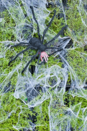 Halloween spider eat hand on green background