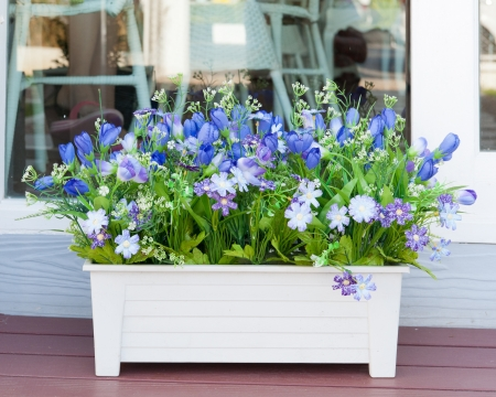 primulas: colorful spring flowers in pots Stock Photo