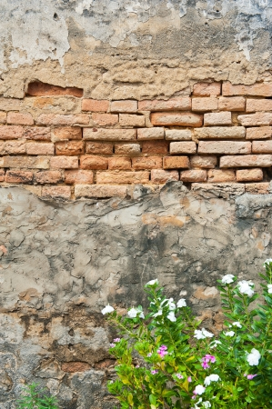 Tree with brick wall background  Stock Photo