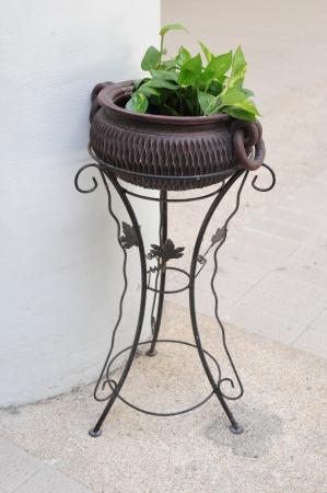 Ivy on flowere pot photo