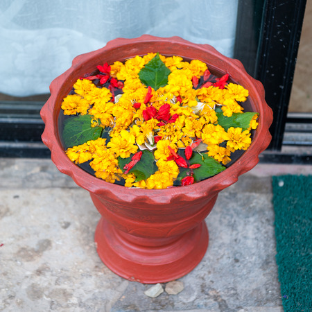 pot with flower