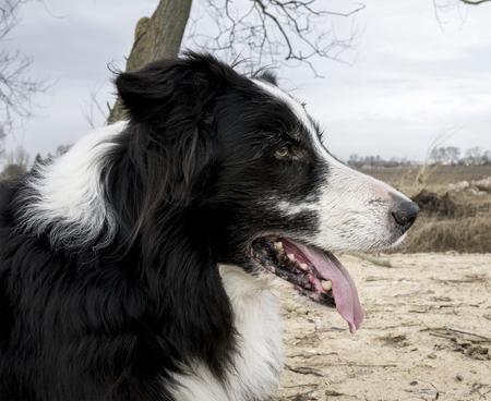 休息のために座っている犬