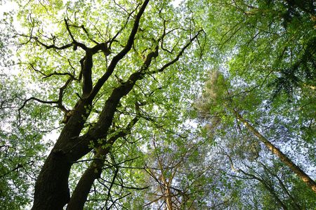 Volta di foresta Di Estate
