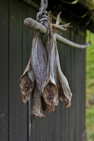 dried fish: Wind-dried fish hanging outside the old house