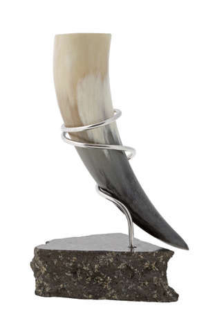 A drinking horn made from a sheep photo