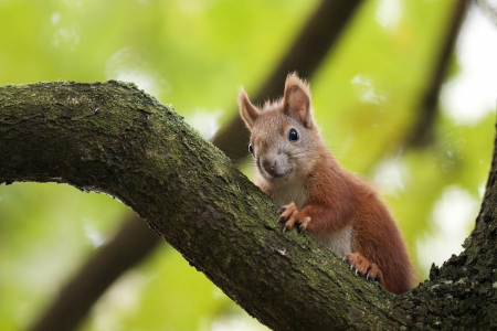 The red squirrel in the forest  photo