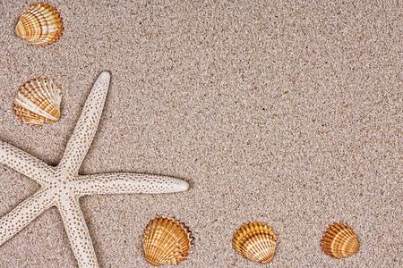 Seashells on the sand or texture photo