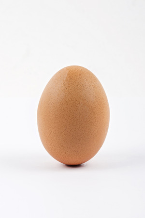 Chicken Egg photo