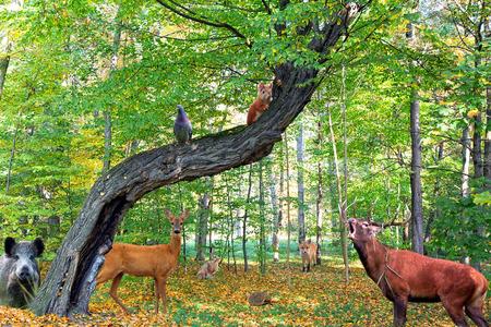 animales del bosque: Bosque lleno de animales Foto de archivo