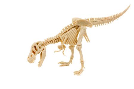 paleontologist: T-Rex Skeleton on a white background