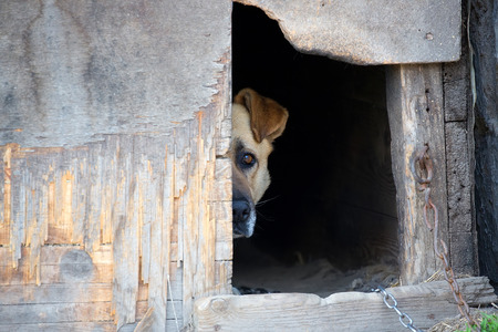 captivity: Dog on a chain in a dog house