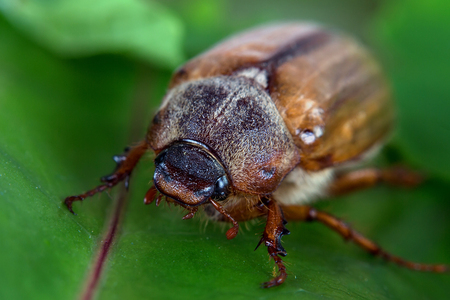 Beetle in the wild