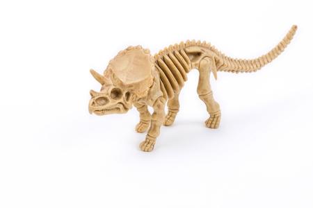 paleontologist: Triceratops dinosaur skeleton