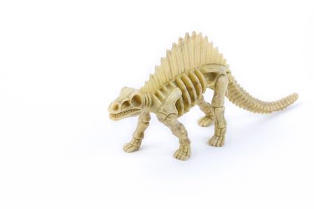 paleontologist: Dimetrodon dinosaur skeleton