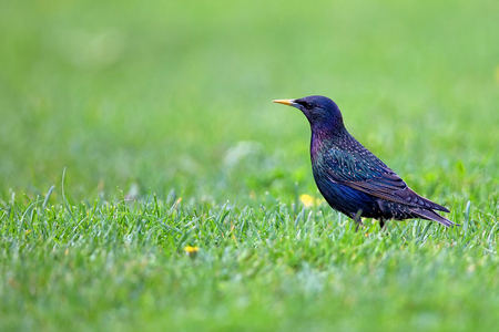 Starling in a clearing