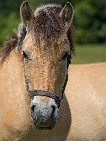 Horse, a portrait Zdjęcie Seryjne