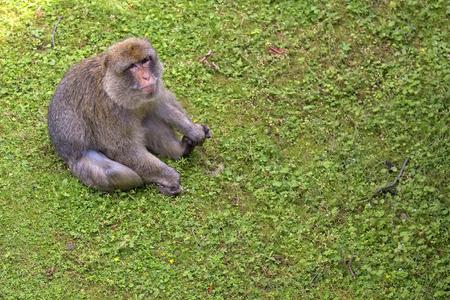 Monkey in a clearing Zdjęcie Seryjne